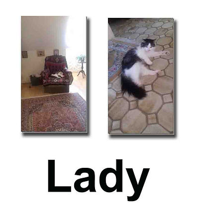 Lady 10 11 18 copie.jpg