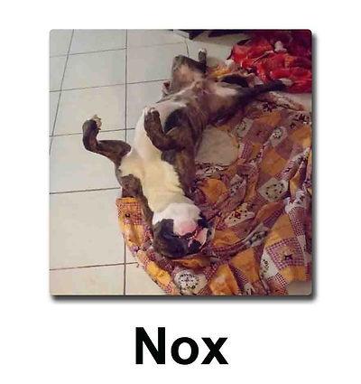 nox copie.jpg