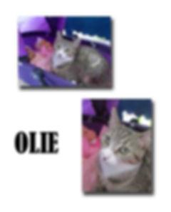 OLIE copie.jpg