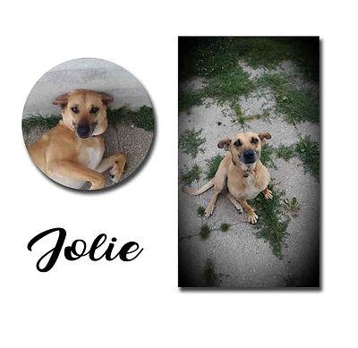 Jolie copie.jpg