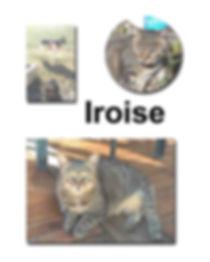 Iroise 17 10 18 copie.jpg