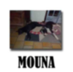 MOUNA copie.jpg