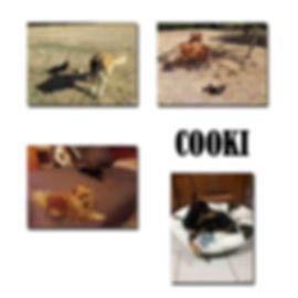 COOKIE EX PEANUTS copie.jpg