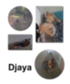 Djaya 22 10 18 copie.jpg