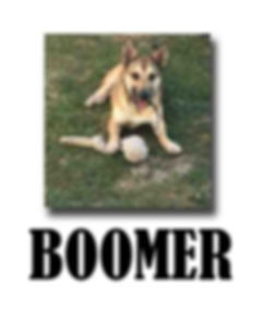 BOOMER copie.jpg