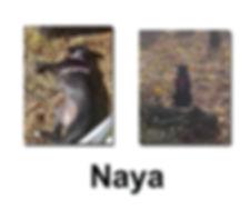 Naya 21 10 18 copie.jpg
