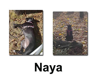 Naya 21 10 18 copie.jpg