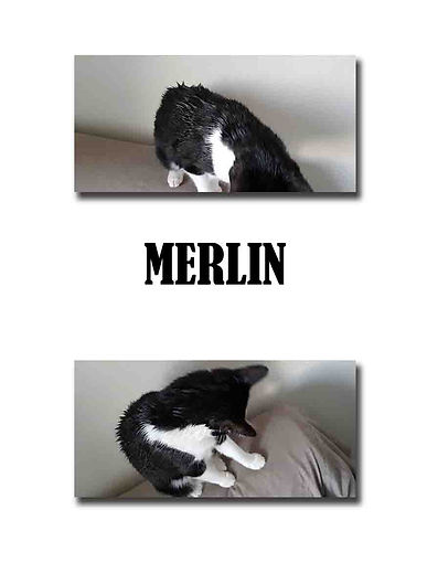 MERLIN copie.jpg