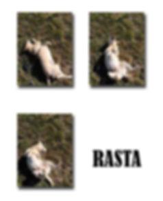 RASTA copie.jpg