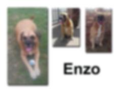 Enzo 1 12 18 copie.jpg