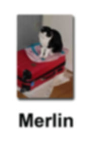 Merlin copie.jpg