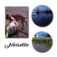 Noisette copie.jpg