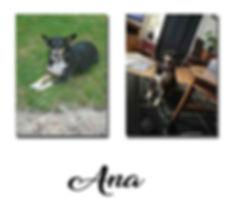 Ana copie.jpg