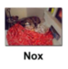 Nox 19 11 18 copie.jpg