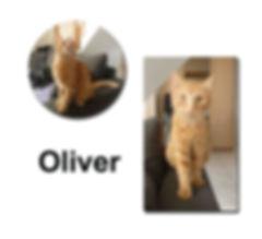 Oliver 21 10 18 copie.jpg