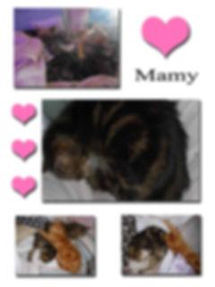 MAMY copie.jpg