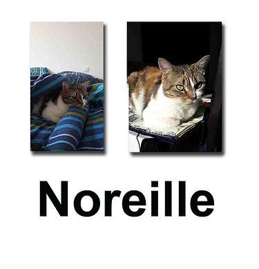 Noreille 26 10 18 copie.jpg
