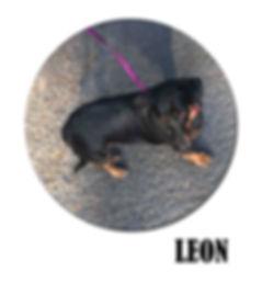 LEON copie.jpg