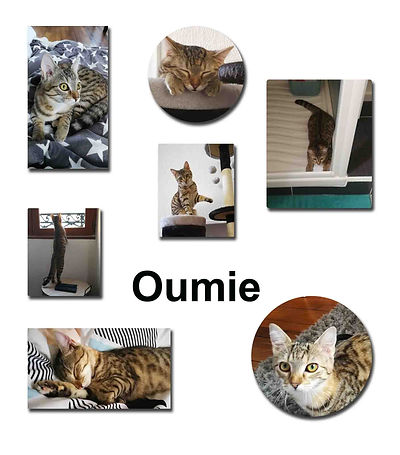 Oumie 21 10 18 copie.jpg