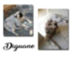 Diguane copie.jpg