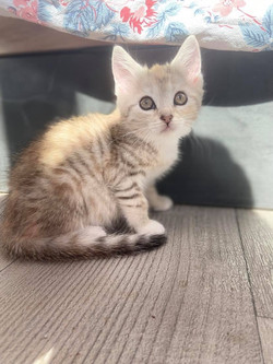 Sally  - Femelle  Né le 15.04.2021