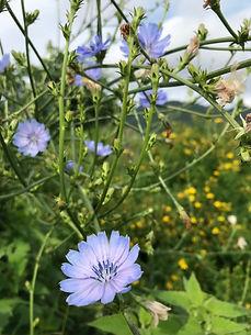 紫の花.JPG