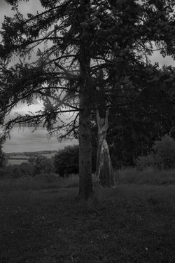 'The_tree'selfportrait©elkeandreasboon,2017_copy_copy