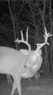 deer 1.png