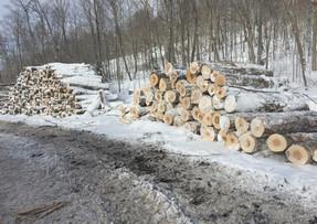 Hardwood pulp and logs