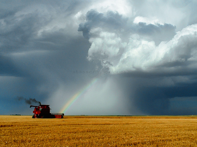 """""""Rainbow Harvester"""" by Stasser; photograph of wheat being harvested during a rainbow"""