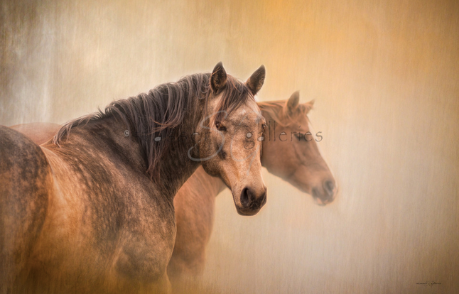 """""""Cowboy Cadillac"""" by Stasser; image of two horses"""