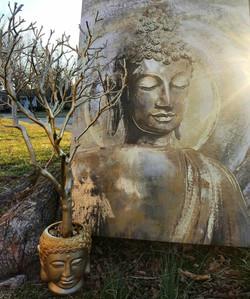 Buddah Tree