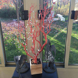 coral Tree with natural base