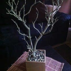 olive green tree with natural base