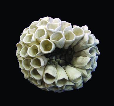 Nesting Form II