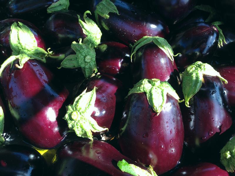 Eggplant May 7 2014_edited.JPG