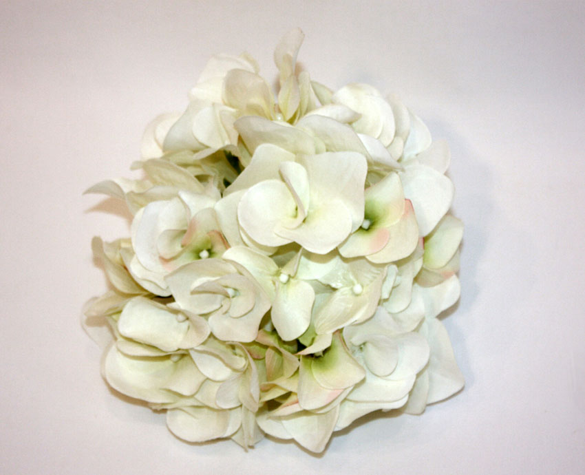 peonía-blanca