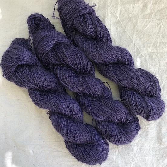 Leicester Lavendel
