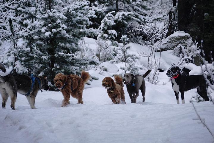 dogwalkingwhistler