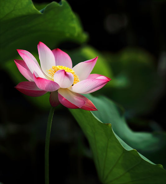 shallow-focus-photo-of-pink-and-white-pe