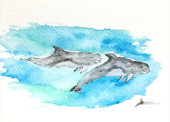 Framed Original Watercolour of Risso's dolphins