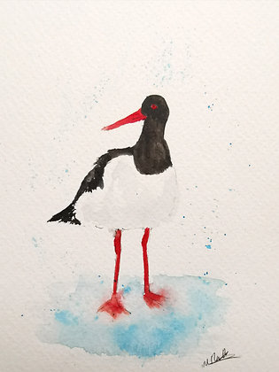 Framed Original Watercolour of an Oyster Catcher