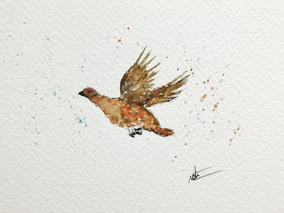 Framed Original Watercolour of a Red Grouse