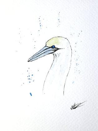 Framed Original Watercolour of a Gannet