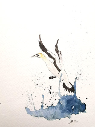 Framed Original Watercolour of a Gannet