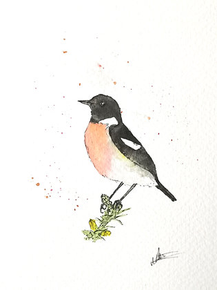 Framed Original Watercolour of a Stonechat