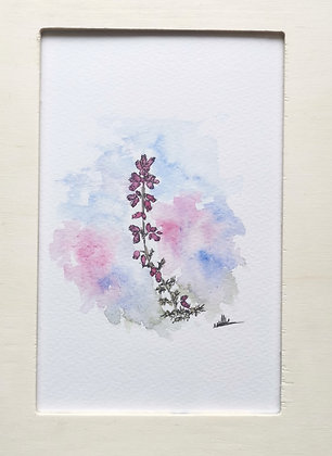 Framed Original Watercolour of a Heather stalk
