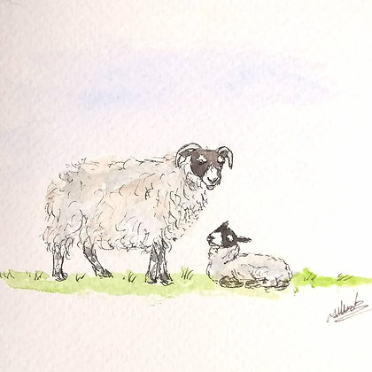Framed Original Watercolour of a Scottish blackface sheep