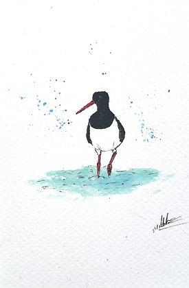 Framed Original Watercolour of an Oyster Catcher