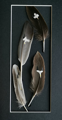 Gannets painted on duck and chicken feathers